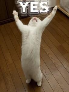 YES_cat - コピー